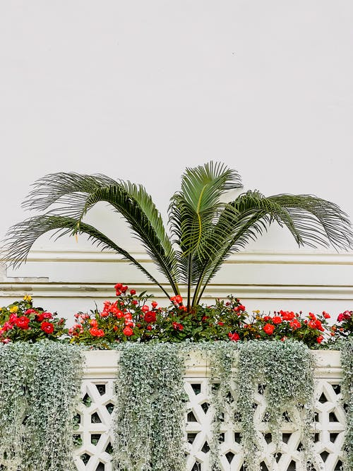 Plants Behind a Balcony