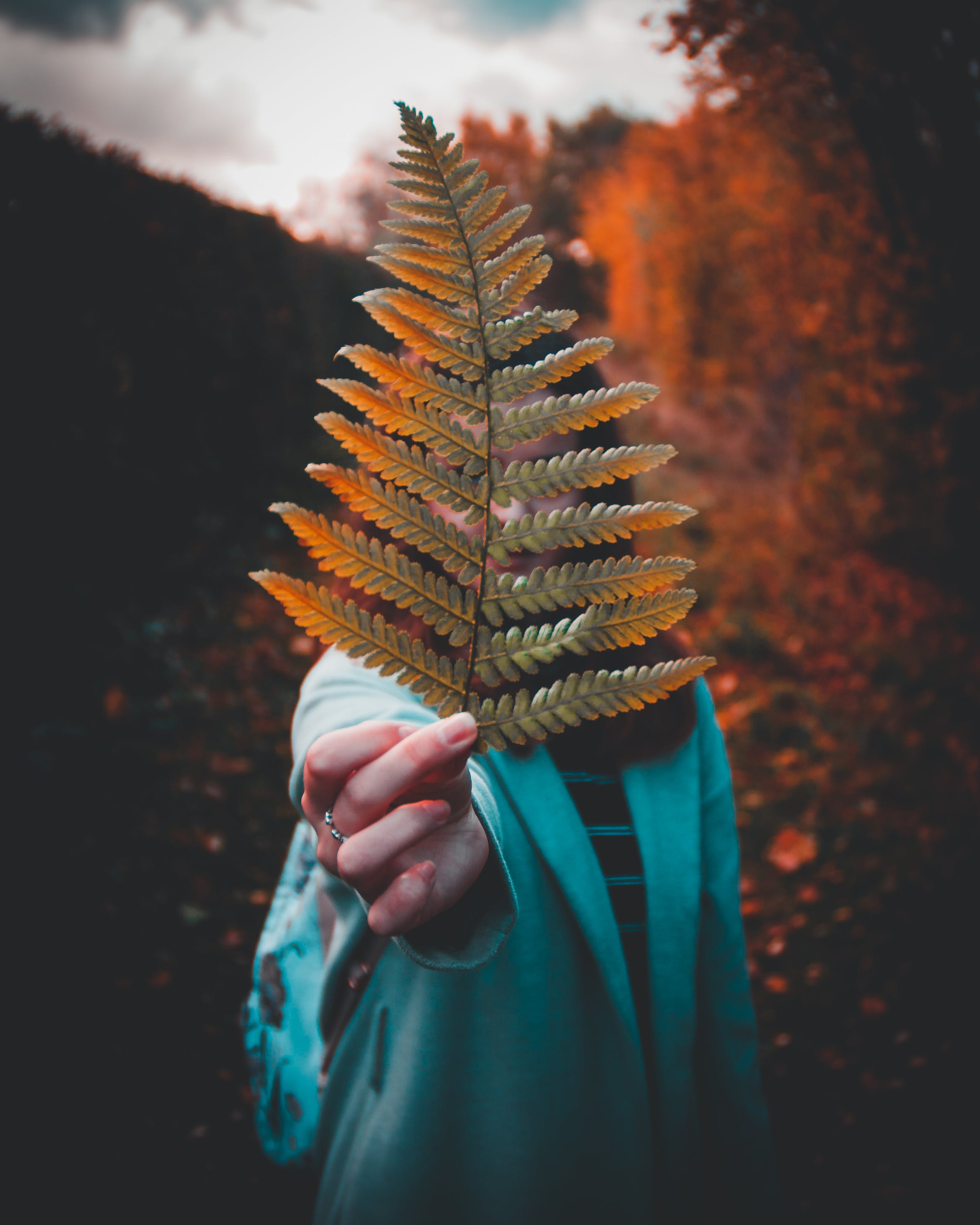 Photography of a Woman Holding Fern