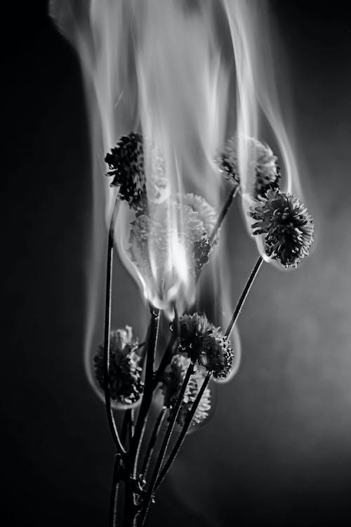 Бесплатное стоковое фото с бутон, в огне, Искусство