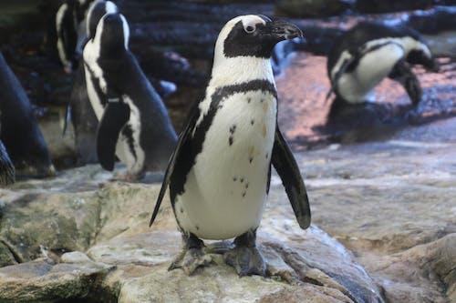 コールド, 動物園, 南極, 可愛いの無料の写真素材