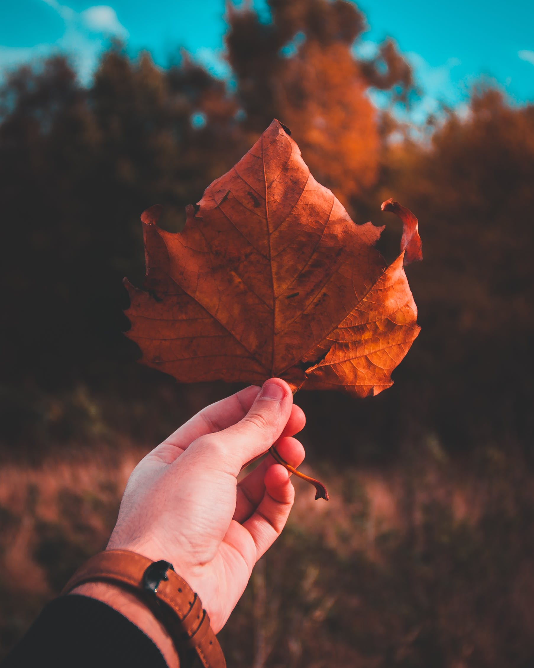 Person Holding Brown Dried Leaf