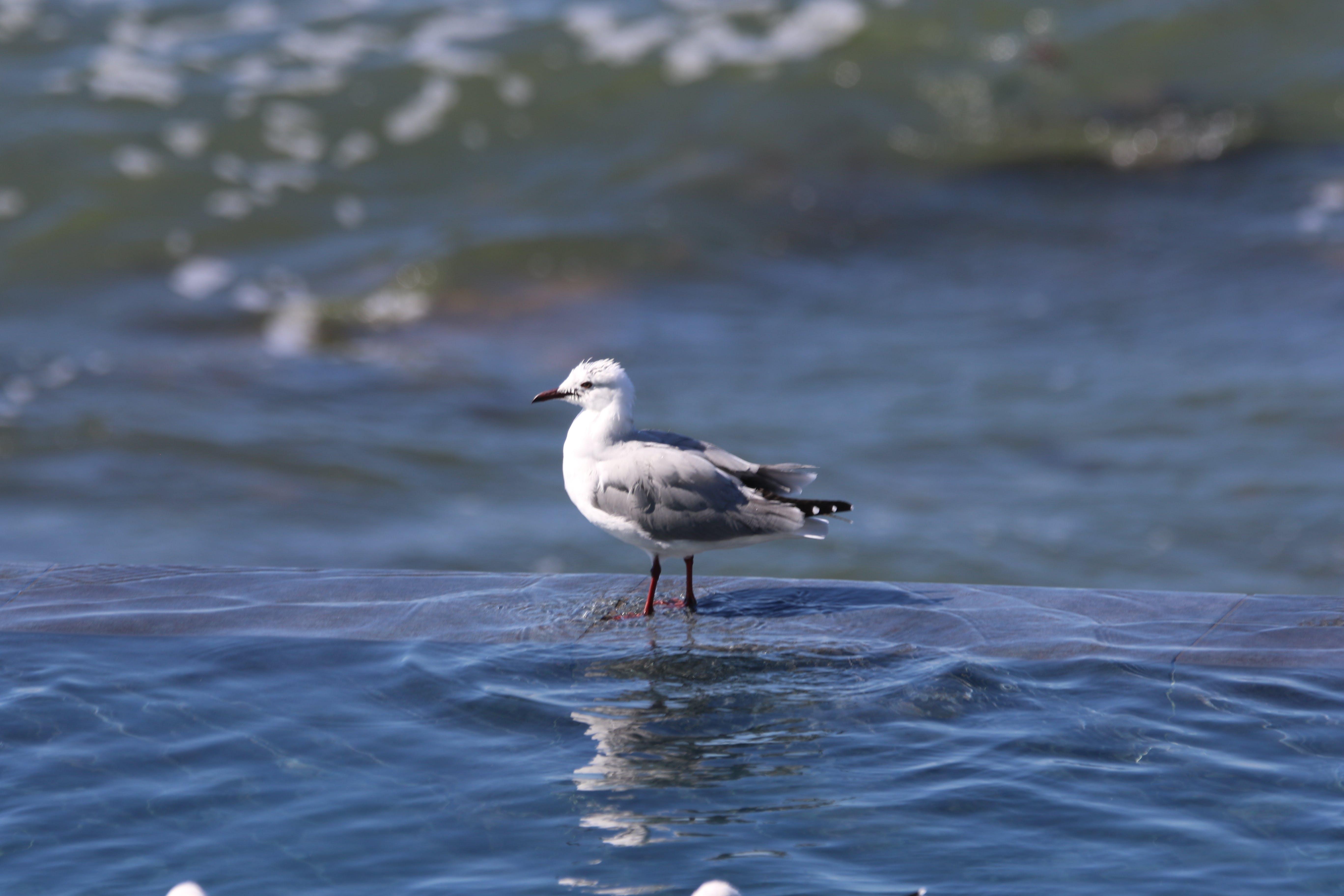 Free stock photo of nature, bird, animal, swimming pool