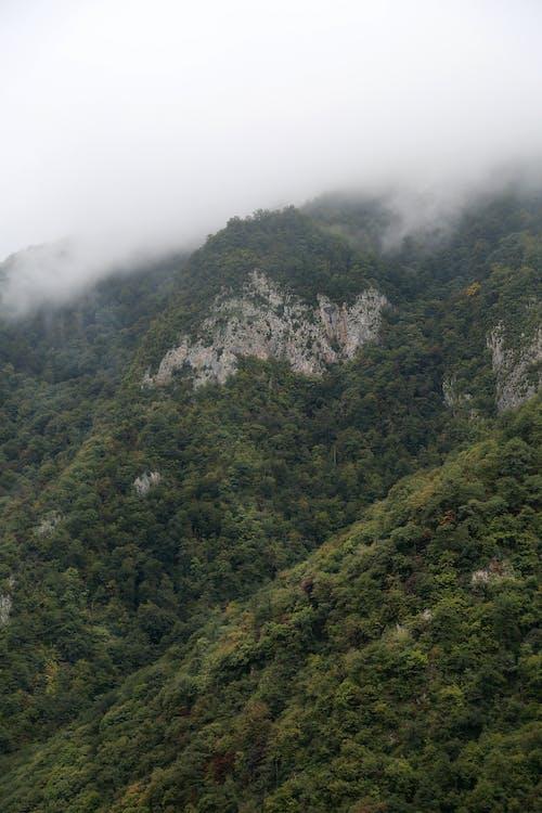 Green Trees on Mountain