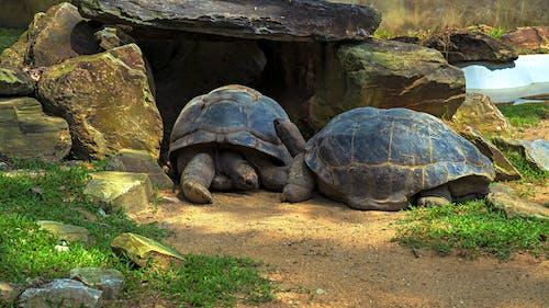 公園, 動物, 動物園 的 免费素材图片