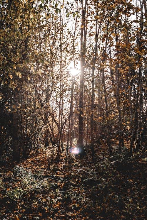Darmowe zdjęcie z galerii z drewno, drzewo, flara