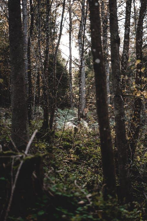 Darmowe zdjęcie z galerii z bujny, drewno, drzewo
