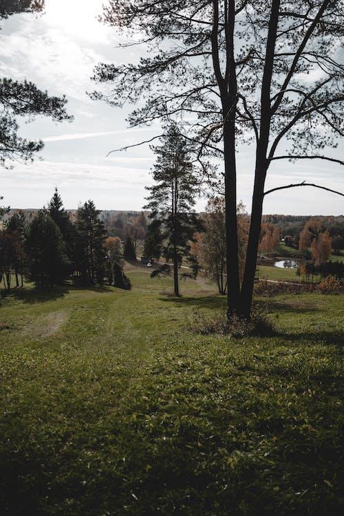 Darmowe zdjęcie z galerii z drewno, droga, drzewo