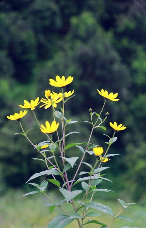 Free stock photo of artificial flowers, beautiful flower, beautiful nature