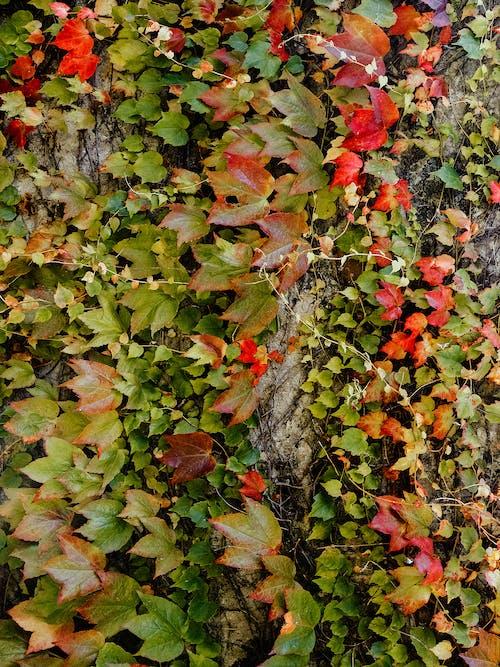 Immagine gratuita di albero, autunno, avvolto