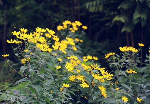 Free stock photo of beautiful flowers, beautiful nature, beauty in nature