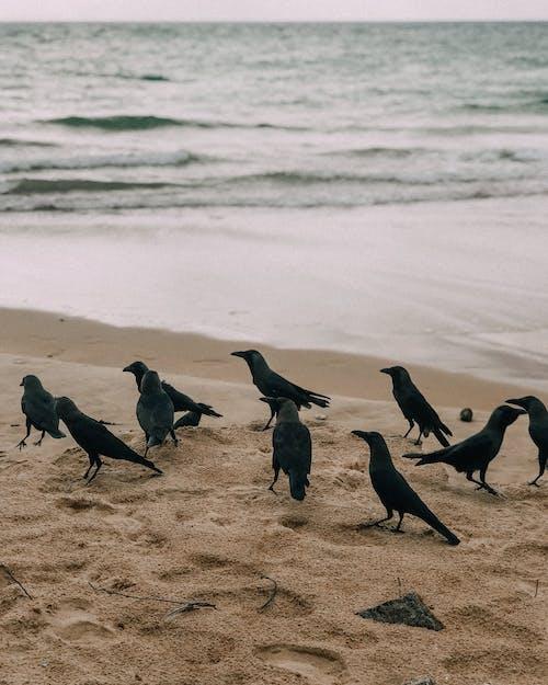 Základová fotografie zdarma na téma mávání, moře, písek