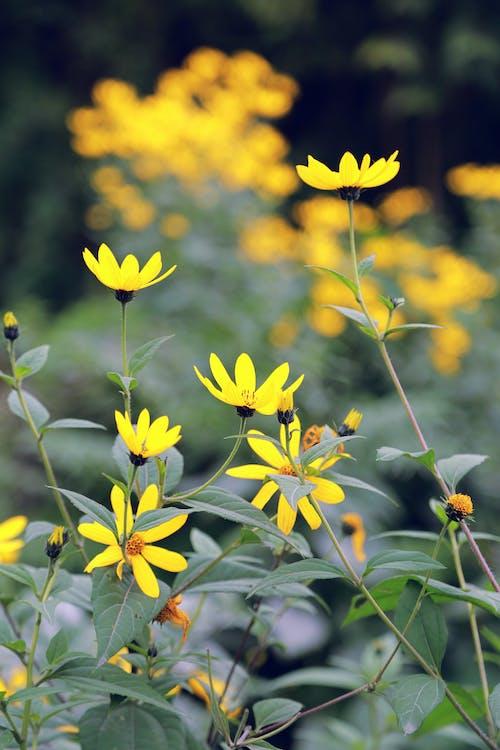 Free stock photo of beautiful flower, beautiful flowers, beautiful nature