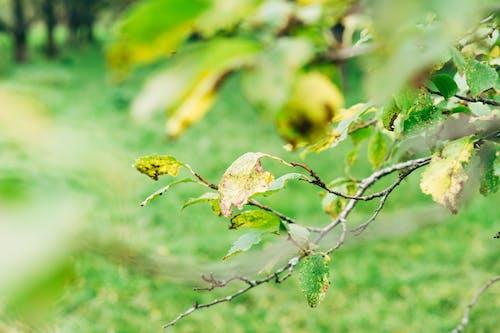 Darmowe zdjęcie z galerii z jesień, kolorowy, kolory