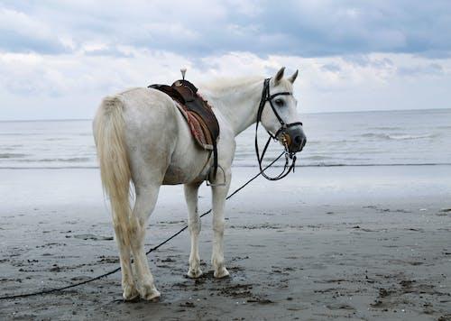 Free stock photo of animal, beach, beautiful nature