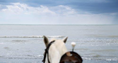 Free stock photo of beach, beach view, beautiful view