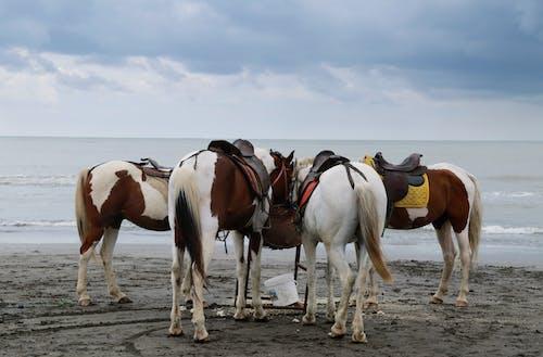 Free stock photo of animal, beach, beach view