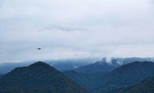 Bird Flying over Green Mountains