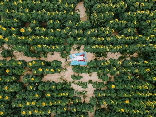 Foto profissional grátis de abundância, agricultura, amarelo dourado