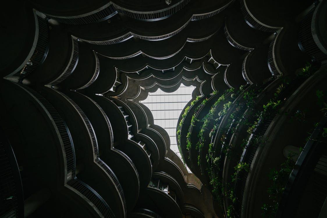 Low Angle Photo of Plants on Rack