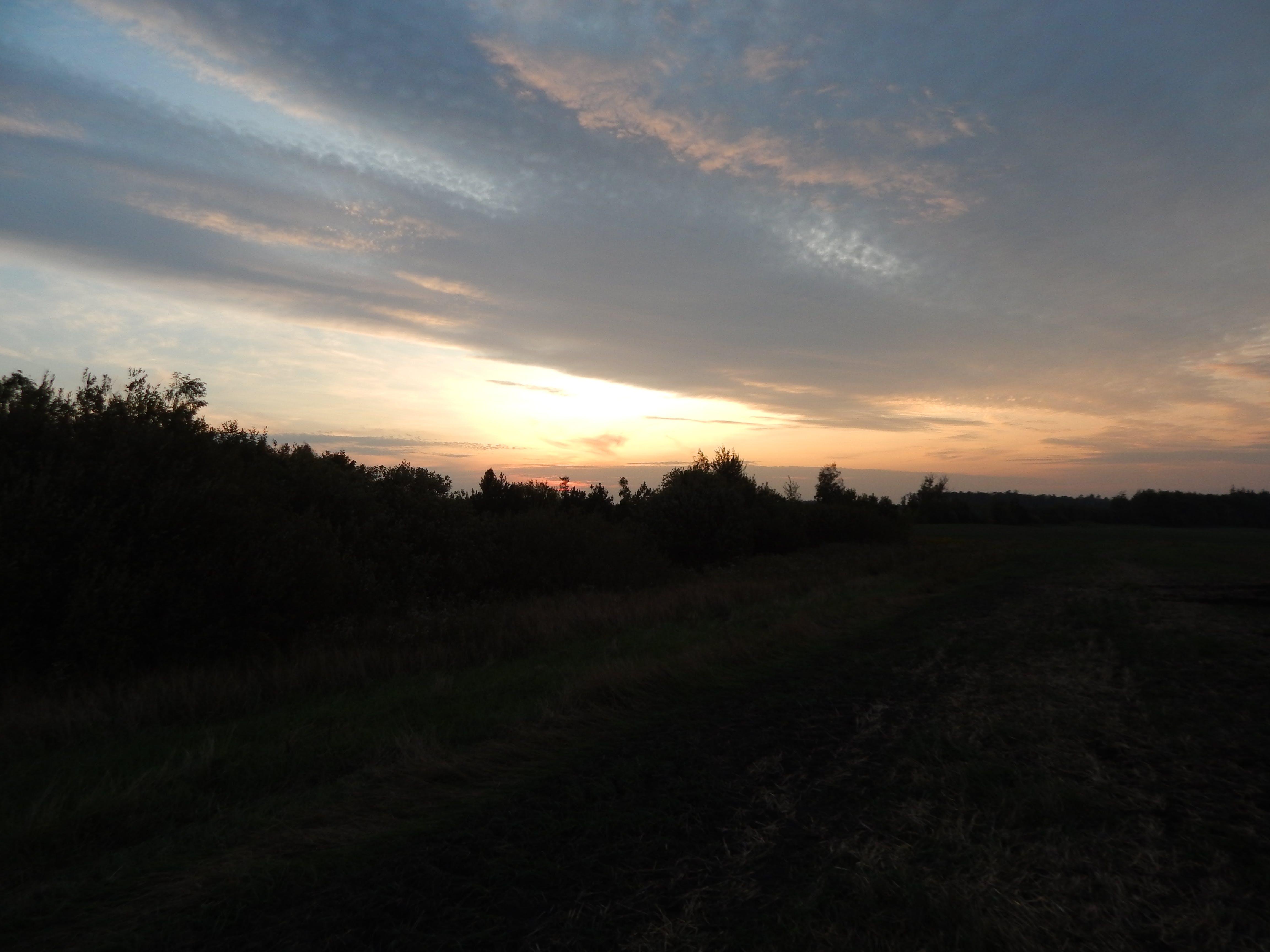 Free stock photo of background, dawn, dusk, farm
