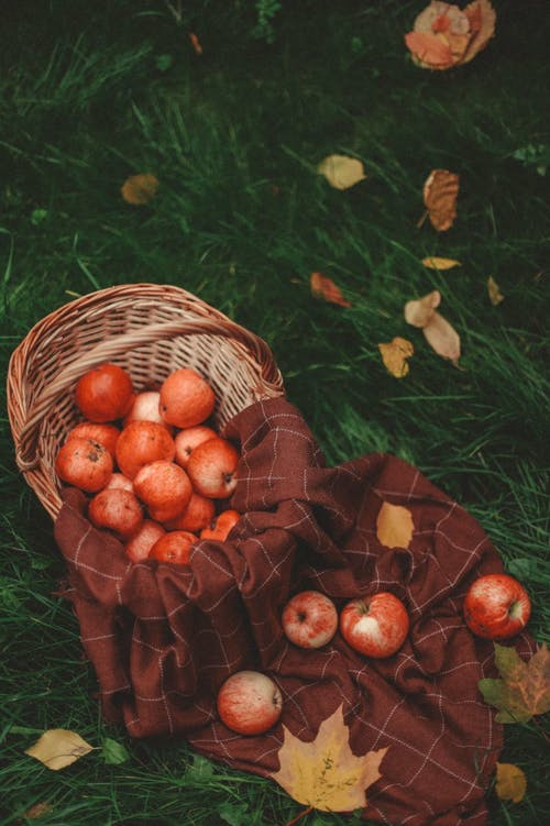 Basket of Apples and a Blanket on the Meadow