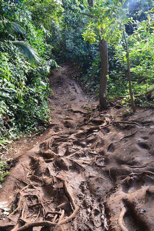 Ảnh lưu trữ miễn phí về bùn, con đường lầy lội, đường mòn bùn