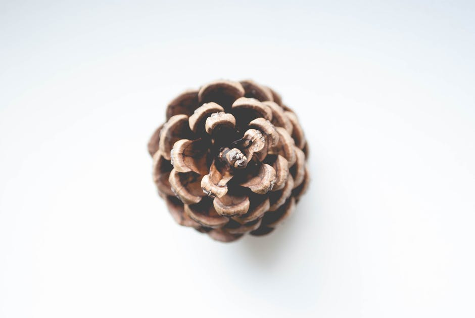 Shallow focus photography of brown conifer cone