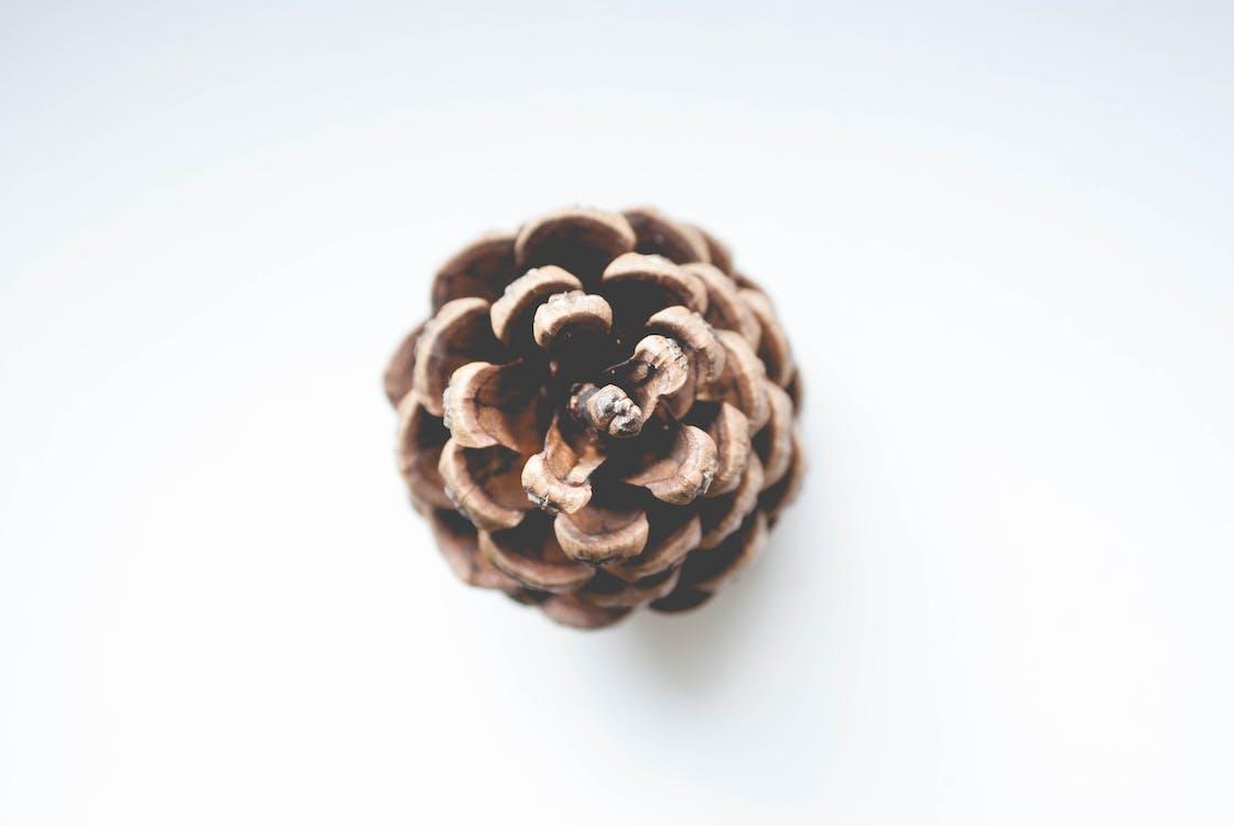 茶色の針葉樹の円錐形の浅い焦点の写真