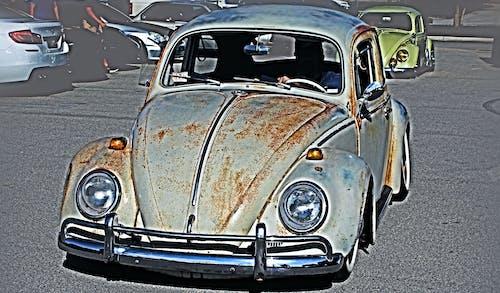 Free stock photo of automobile, beetle, classic auto