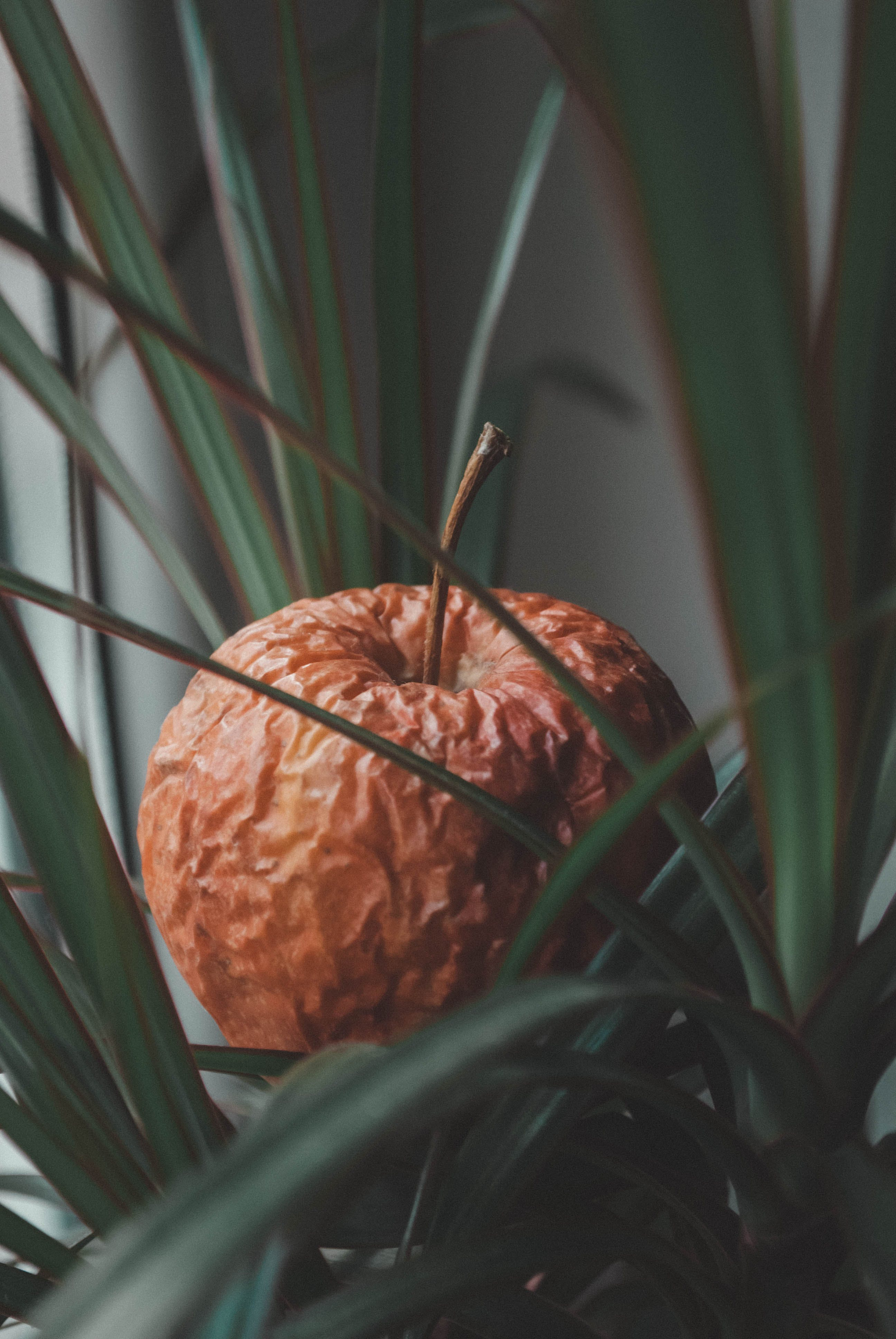 Selective Focus Photo of Brown Fruit