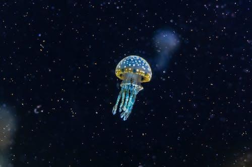 Foto profissional grátis de água, água-viva, animal