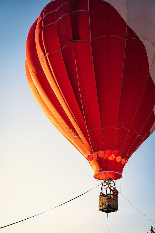 날으는, 낮은 각도보기, 높은의 무료 스톡 사진