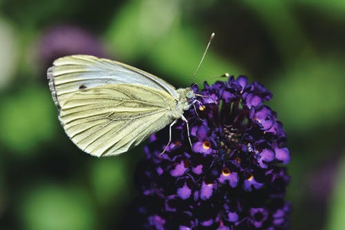 Free stock photo of blur, bright, butterfly