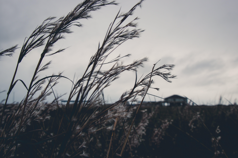 Darmowe zdjęcie z galerii z pole, roślina, trawa, wzrost