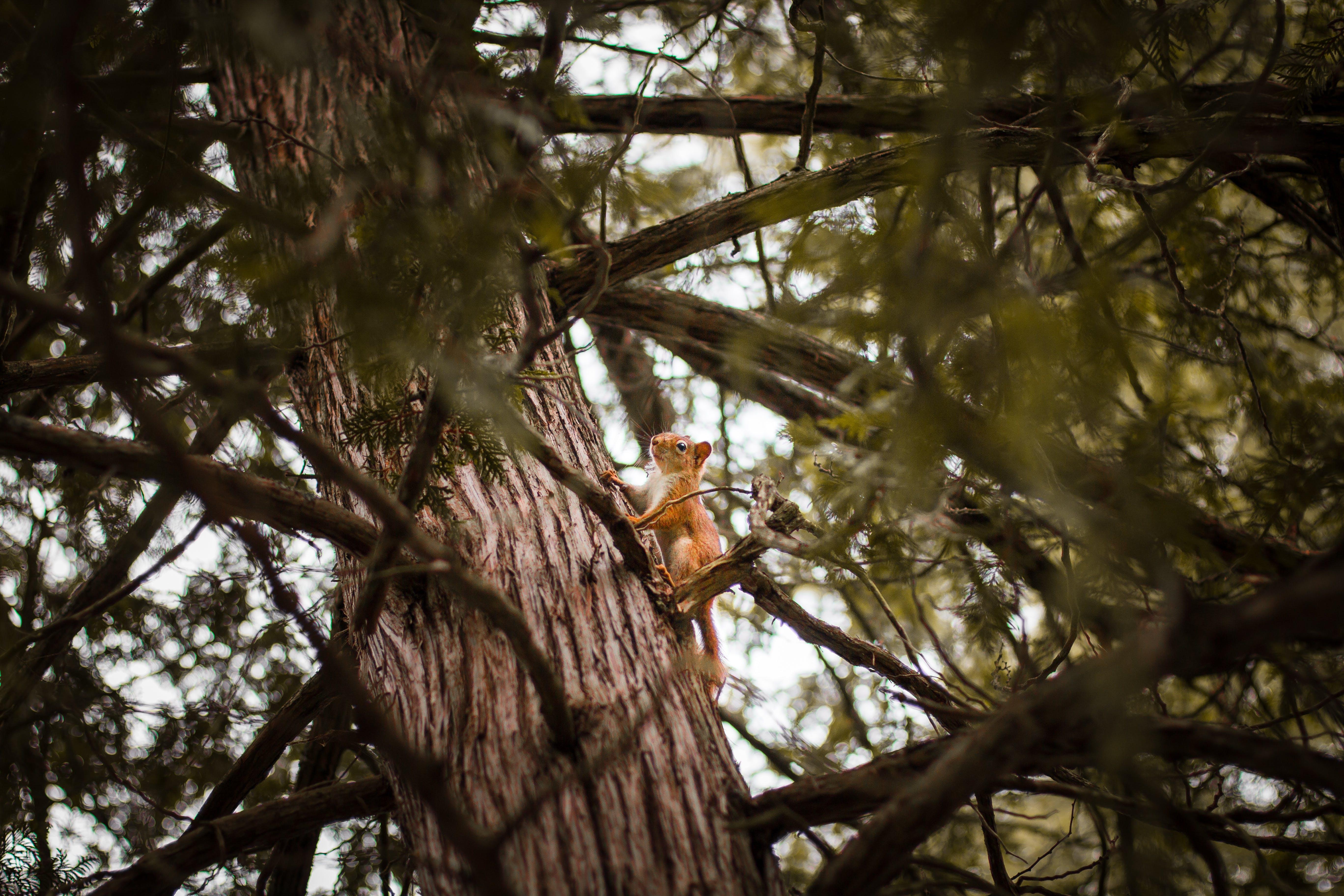 Foto d'estoc gratuïta de animal, arbre, branques, dia