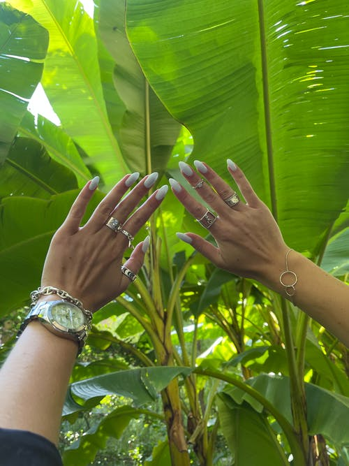 Womans Hands with Big Leaves in Background