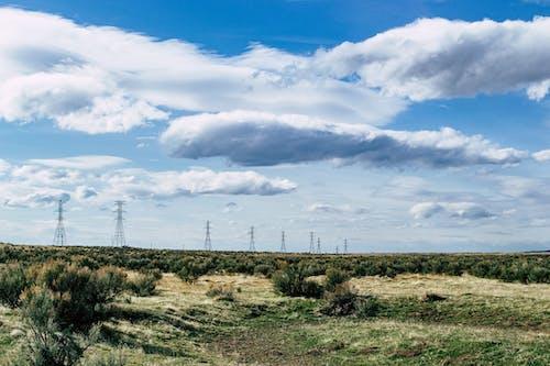 エネルギー, ファーム, フィールド, 低木の無料の写真素材