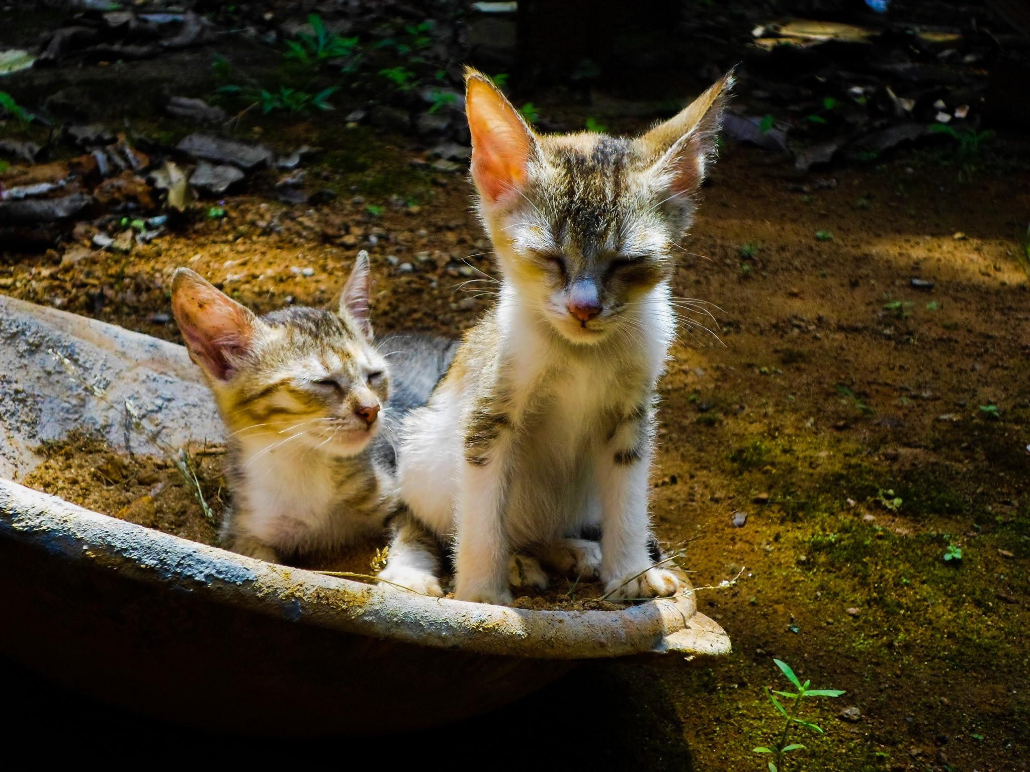 Kostenloses Foto Zum Thema Guten Morgen Katze Katzen