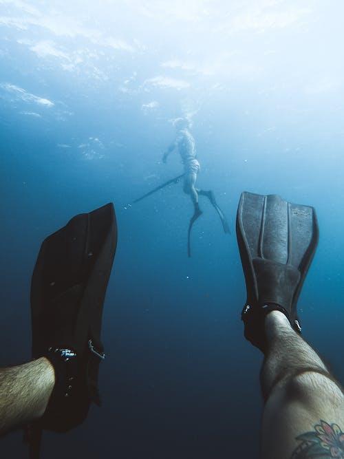 Foto profissional grátis de barbatana, caça submarina, desfocado