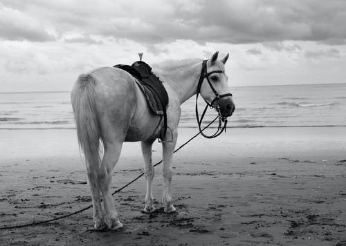 Grayscale Photo of Horse on Beach