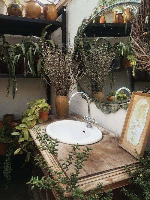 Ilmainen kuvapankkikuva tunnisteilla huone, hyllyt, kasvi