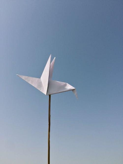 Free stock photo of amnesty, beak, bird