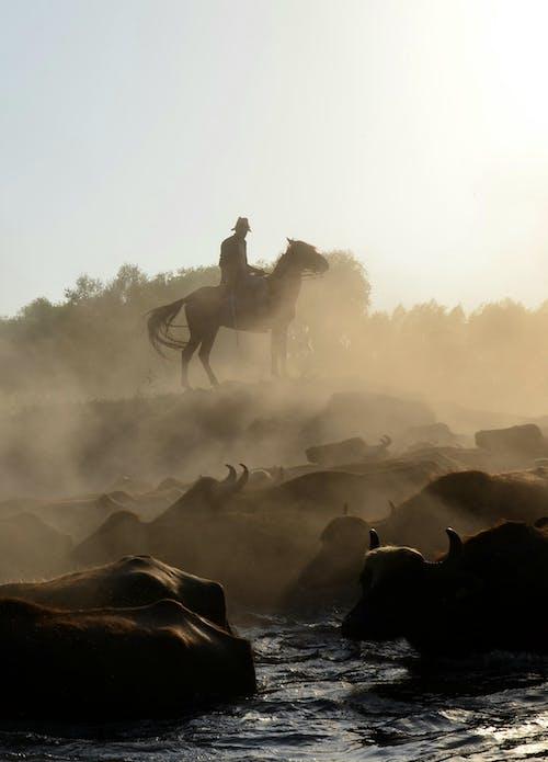 คลังภาพถ่ายฟรี ของ กลางแจ้ง, การขี่, การขี่ม้า