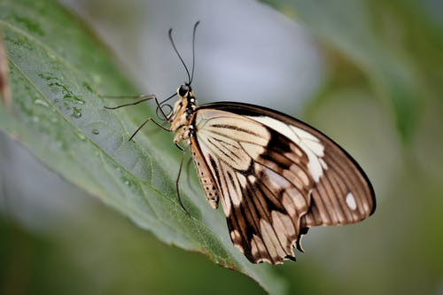 Butterfly with White Brown Wings Sitting on Green Leaf