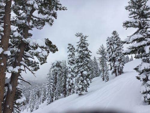 Foto profissional grátis de árvores, inverno, montanhas, neve