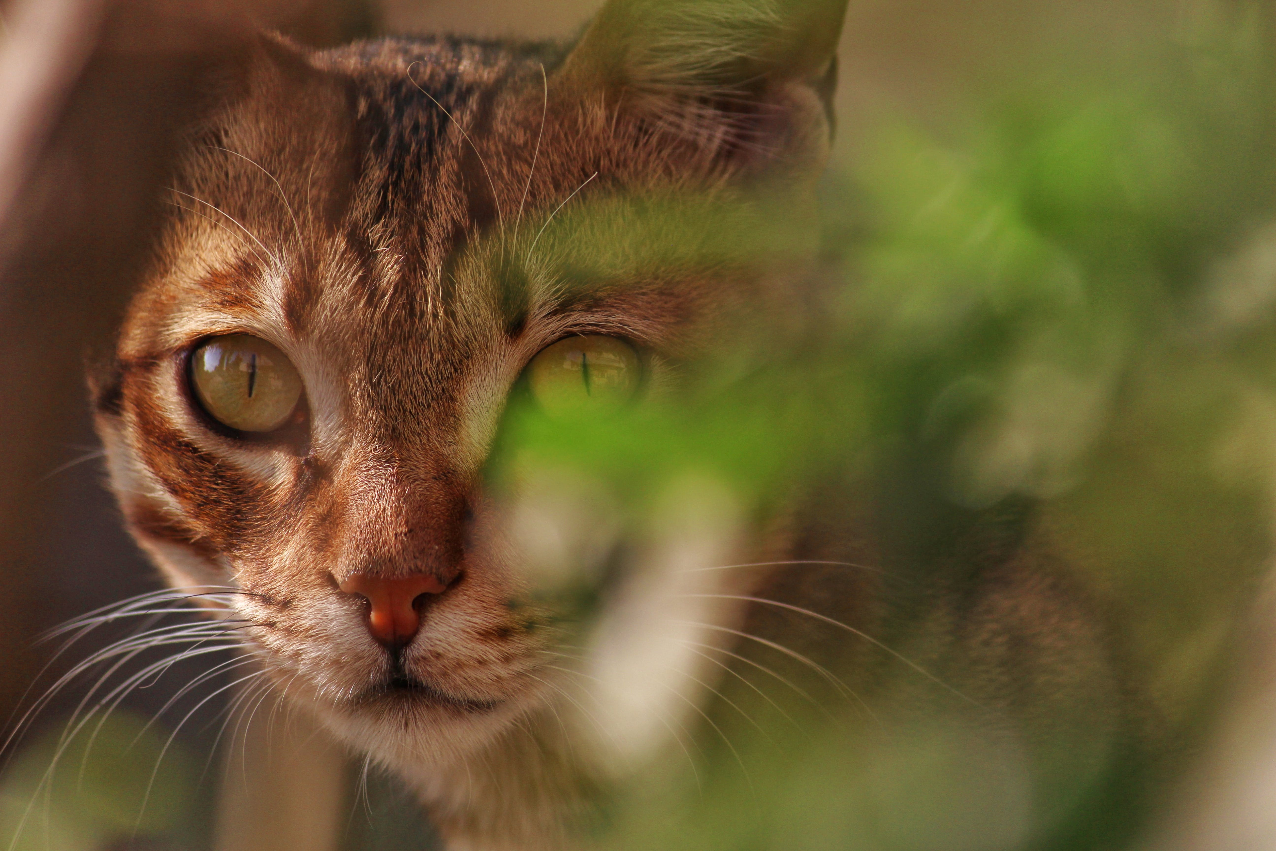 Kostnadsfri bild av däggdjur, djur, dunig, fokus