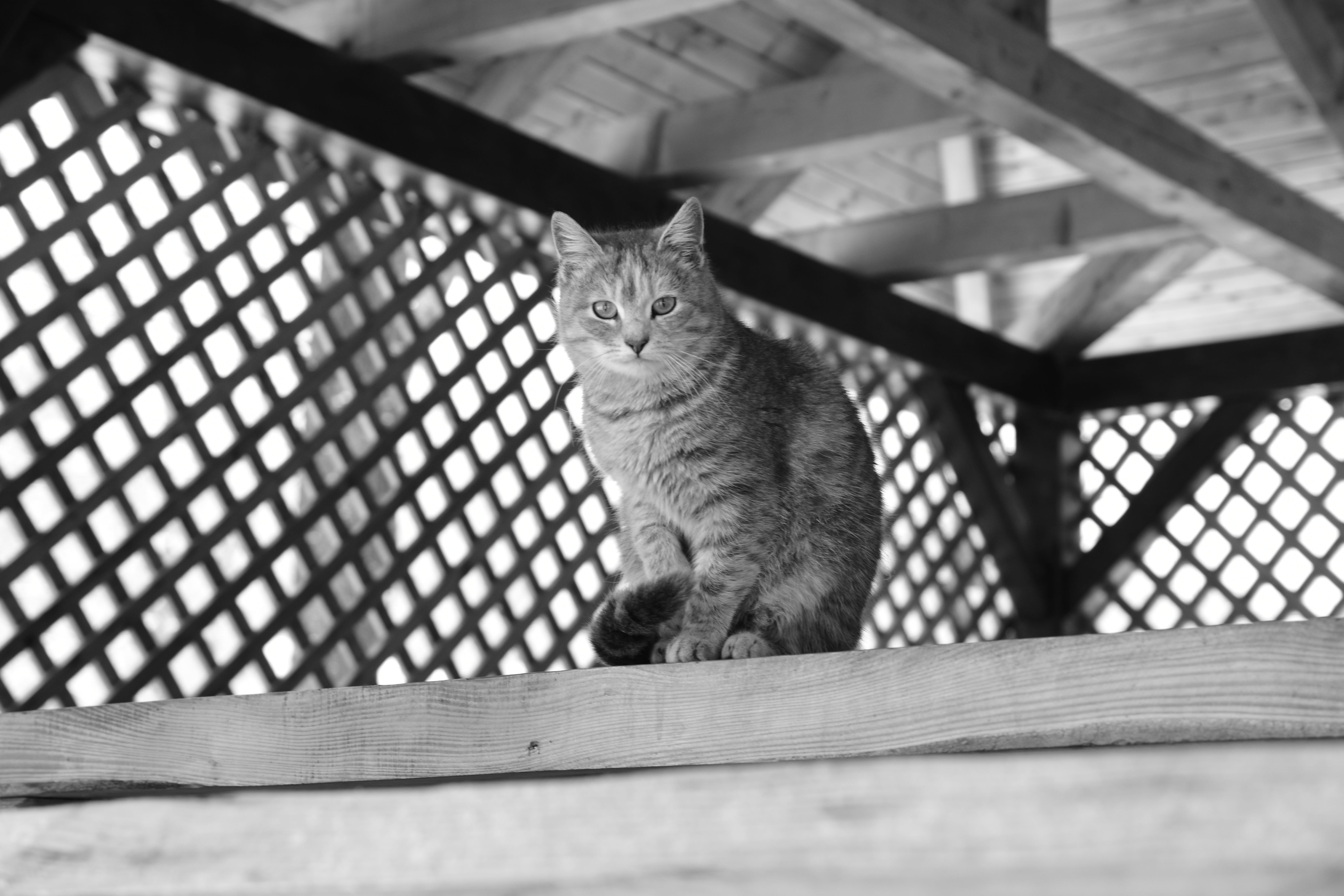 Grayscale Photography of Cat Sitting on Top of Wooden Panel