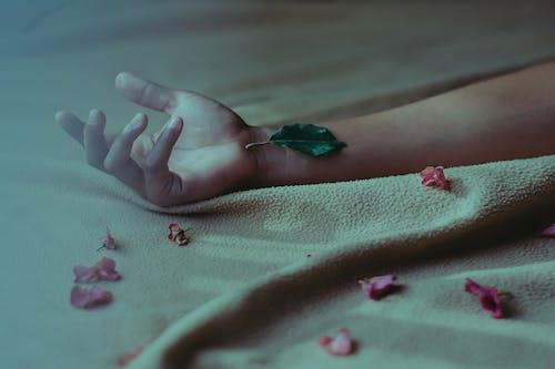 Gratis arkivbilde med blomsterblad, fingre, hånd