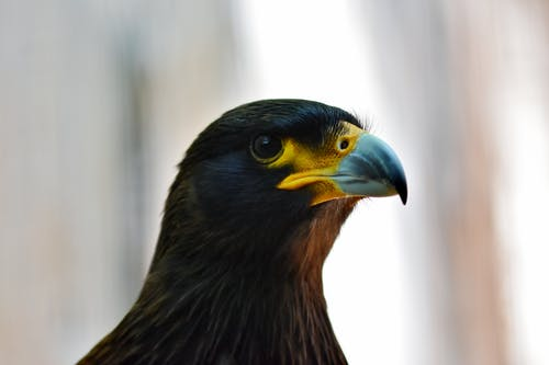 Black and Brown Bird in Close Up Photography