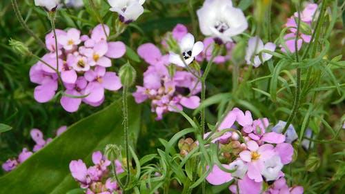 Free stock photo of wild flowers